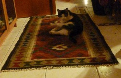 szőnyeg1
