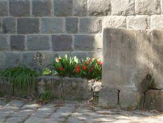 tavasz1