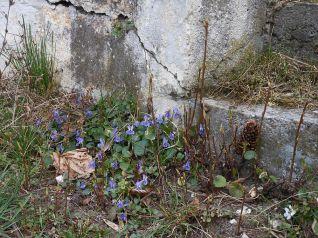 tavasz5